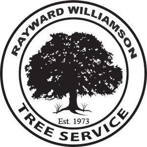 Ray Williamson Tree Service 512/825-8746. Austin and surrounding areas including the Texas hill country and Edwards Plateau. Certified Arborist. Tree Trimming, Pruning, & Reshaping, Stump Grinding, Tree Removal, Storm Cleanup, Mistletoe & Ball Moss Removal, Lot Clearing, Tree Removal For Firebreak. Insured. Certified arborist. 512-825-8746 Caring for your trees like living works of art. Since 1973.